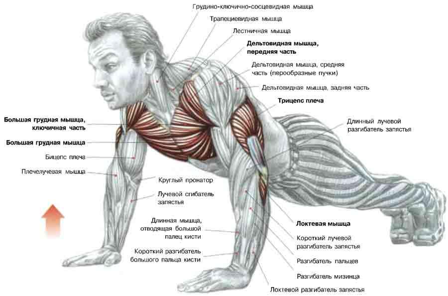 Какой вид спорта качает все мышцы