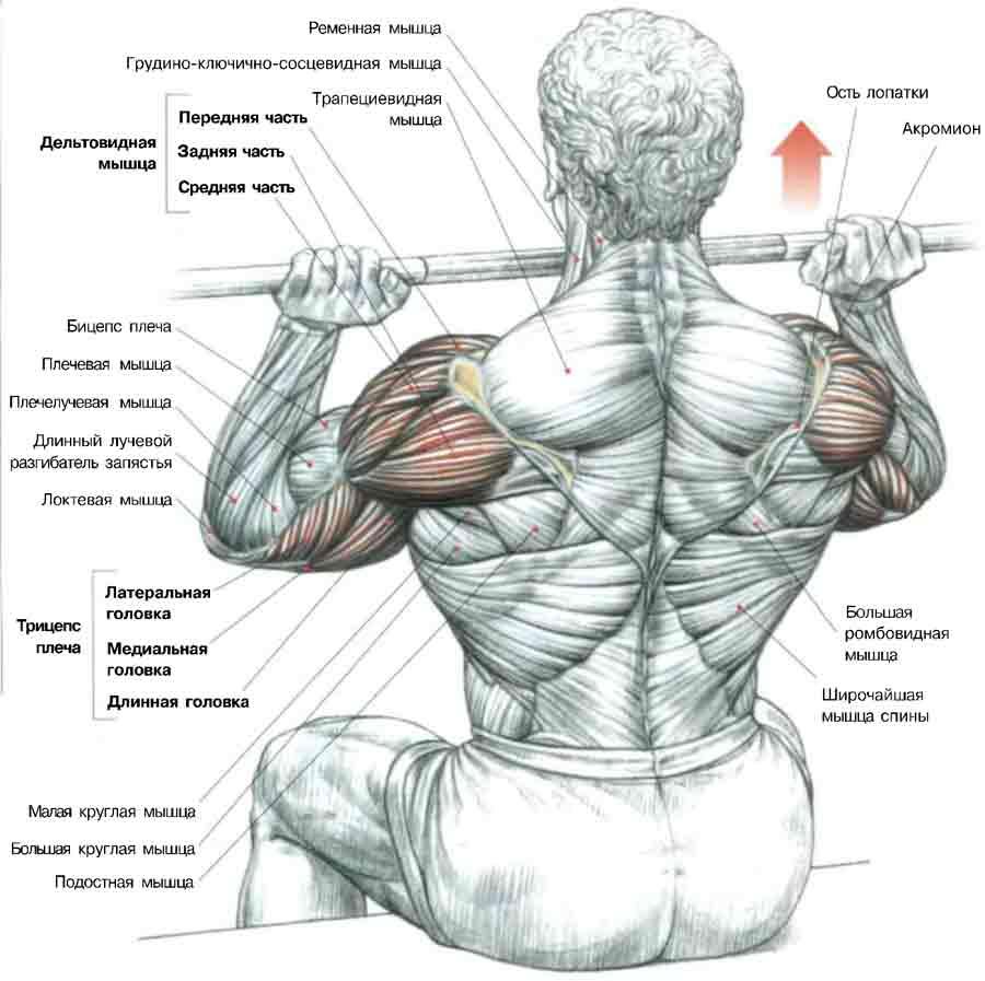 Силовые упражнения на плечи